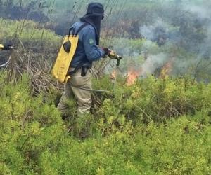 Brigadas especiales controlando el incendio forestal.