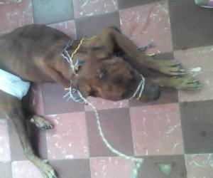 El perro abusado.