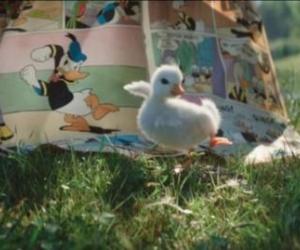 Un patito es admirador como nadie del Pato Donald.