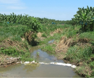 Cultivos de banano en Zona Bananera.