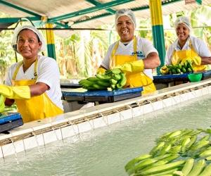 El 2018 fue complejo para las exportaciones del agro colombiano.