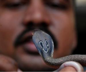 Hombre atacado por serpiente venenosa en la India