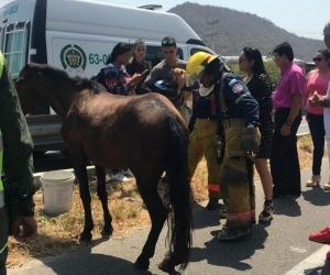 El caballo fue atropellado por un taxi y murió debido a las graves heridas.