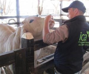 Con los controles buscan aumentar las exportaciones de bovinos y carne en canal a diferentes partes del mundo.