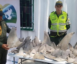 Autoridades incautan aletas de tiburón