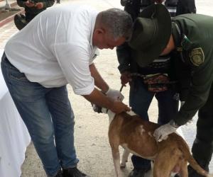 Jornada de vacunación de caninos en Fundación.