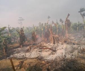 Fue controlado incendio en el Parque Nacional Los Katíos
