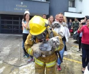 Los bomberos salvaron a los animales