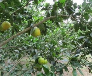 El ICA trabaja de manera conjunta con el sector privado, gremios y productores, para fortalecer la sanidad fitosanitaria del país.