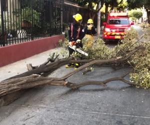 Las brisas que se presentan por estos días han causado la caída de más de una decena de árboles.