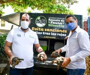 Recuperación de tortugas.