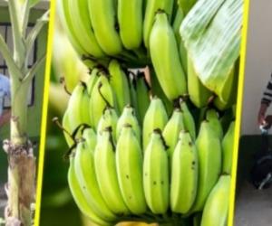 Zona Bananera se fortalece con la ADR mediante la inversión de 2.950 millones de pesos.