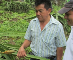 La entidad realizó una visita de inspección, vigilancia  y control para asegurar la condición fitosanitaria del cultivo.
