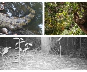 Estos son algunas de las especies que se dejaron ver en el Tayrona