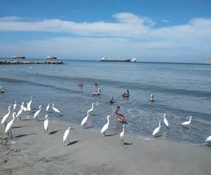 Las playas permanecerán cerradas hasta nuevo aviso.