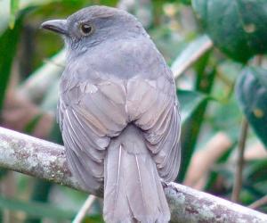 Colombia es el segundo país en el planeta con mayor biodiversidad, después de Brasil.