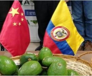 El sector agropecuario además de asegurar la alimentación de los colombianos en el marco de la emergencia, mantiene una dinámica positiva en el comercio internacional y la estrategia de diplomacia sanitaria sigue dando sus frutos.