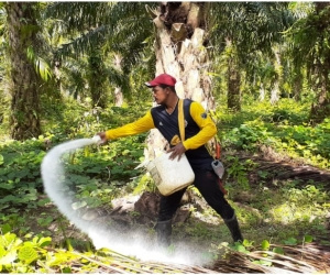 Este año, con el lema 'Tecnología e innovación por una palmicultura colombiana resiliente',