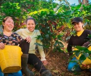 Podrás conocer todo lo relacionado con con el café de la Sierra Nevada