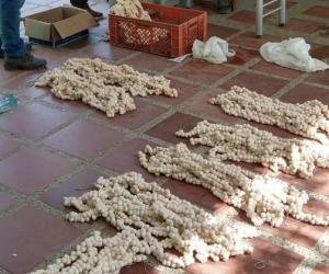La incautación de los huevos se llevó a cabo en Ciénaga.