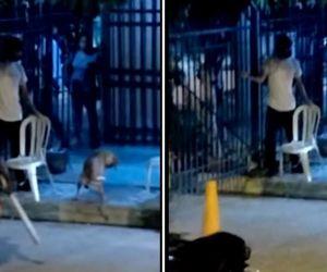 Momentos en el que llevaban al perro para asesinarlo.