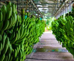 La tasa de crecimiento anual de las exportaciones para ambas fue del 12.000% para el Magdalena.