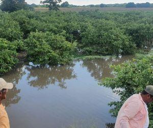 Inundaciones en cultivos en Salamina.
