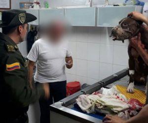 Uno de los perros agredidos.