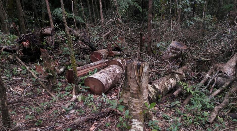 La tala indiscriminada afecta el cambio climático.