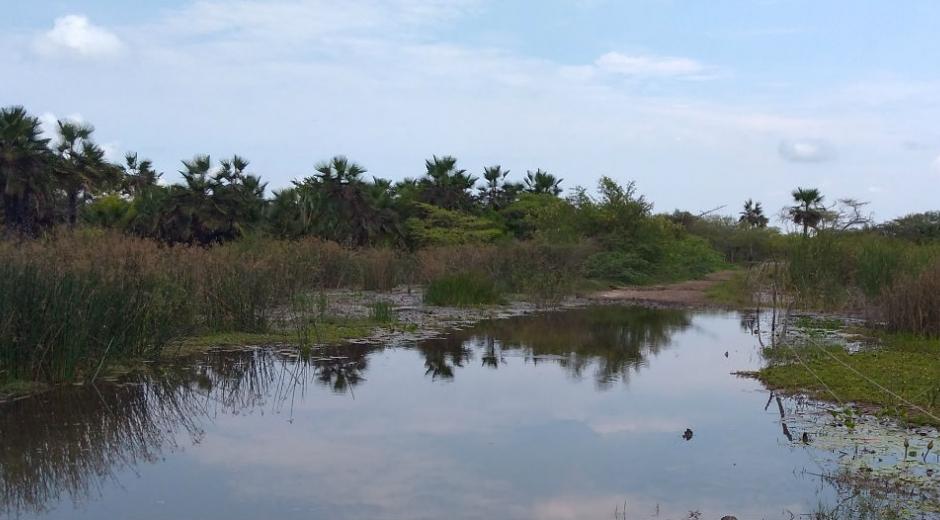 El Caño El Burro está incluído dentro del plan de recuperación.
