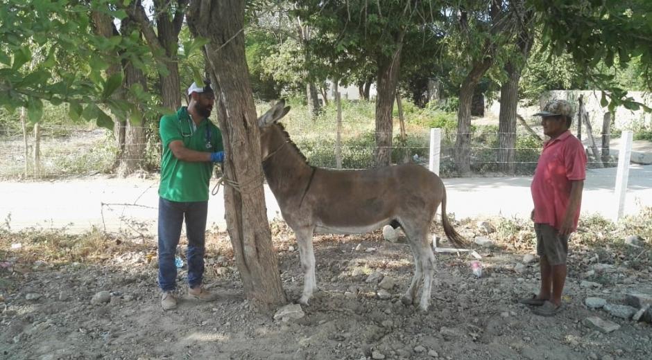 Inició Programa de Sustitución de vehículos de Tracción Animal de la Alcaldía