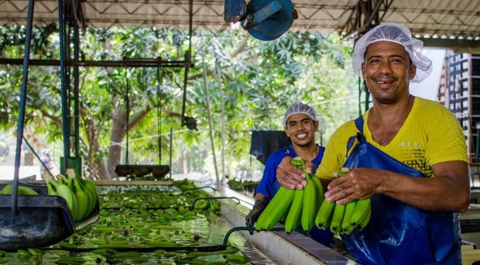 El IV Foro Bananero será un espacio de análisis de la cadena productiva del banano.