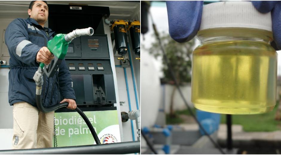 Con el apoyo del Gobierno, Colombia está listo para desarrollar nuevo programa de biodiésel con alto impacto económico y social.