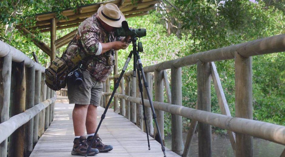 Avistamiento de aves en Santa Marta.