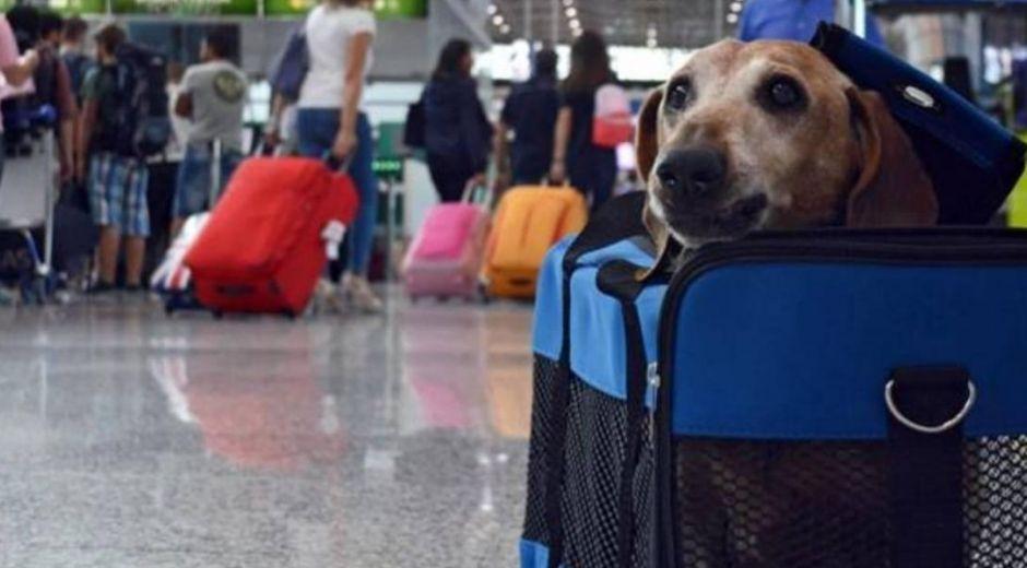 Nuevos requisitos para salida e ingreso de mascotas en Colombia.