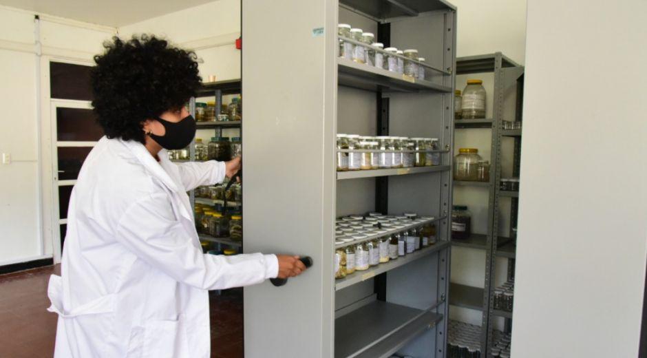 El proyecto se desarrolla con financiación de la Unión Europea y Gbif.